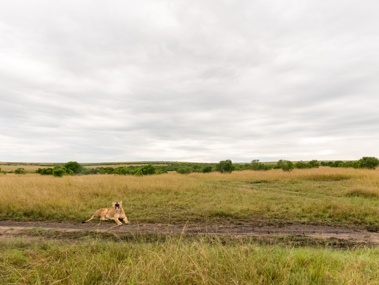 Art and Documentary Photography - Loading Kenya-24.jpg