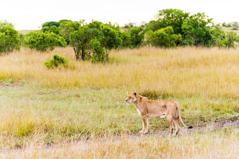 Art and Documentary Photography - Loading Kenya-25.jpg