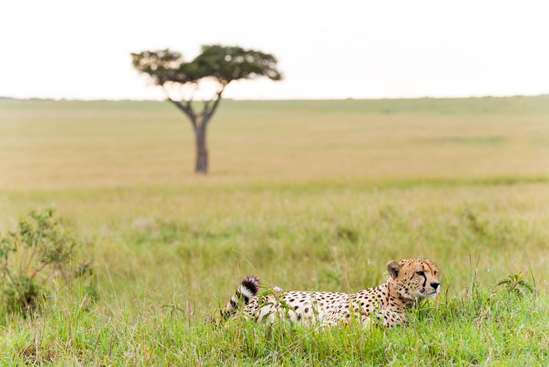 Art and Documentary Photography - Loading Kenya-26.jpg
