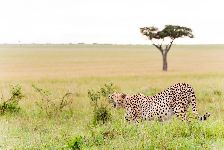 Art and Documentary Photography - Loading Kenya-29.jpg