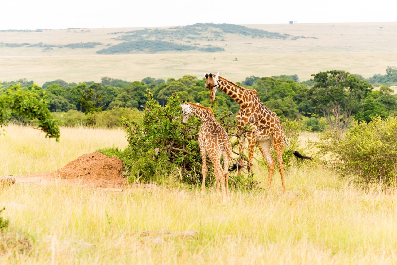 Art and Documentary Photography - Loading Kenya-31.jpg