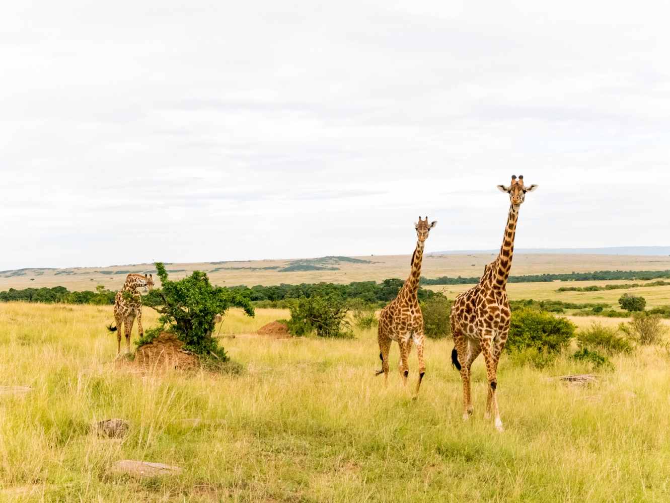 Art and Documentary Photography - Loading Kenya-32.jpg