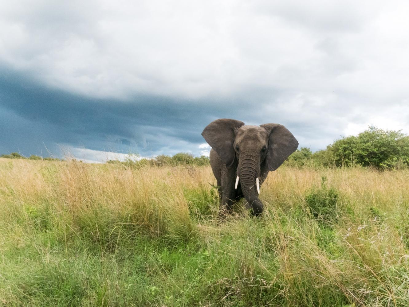 Art and Documentary Photography - Loading Kenya-41.jpg