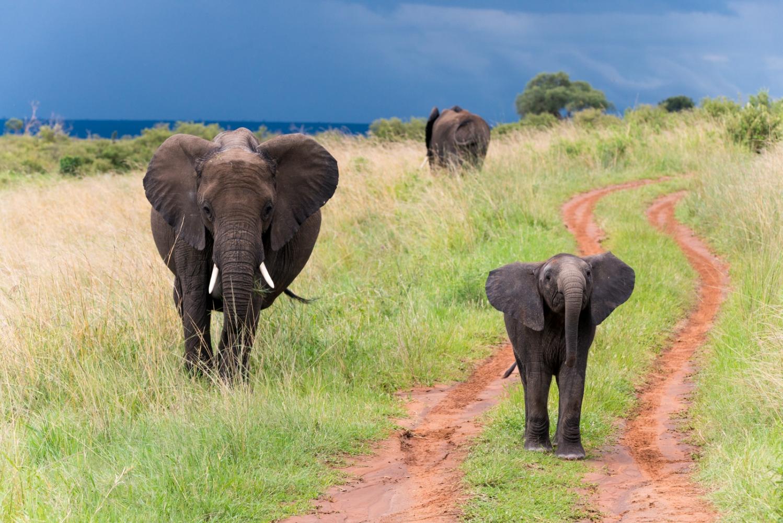 Art and Documentary Photography - Loading Kenya-42.jpg