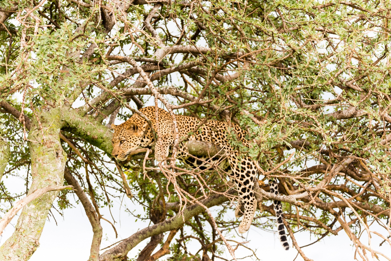 Art and Documentary Photography - Loading Kenya-44.jpg