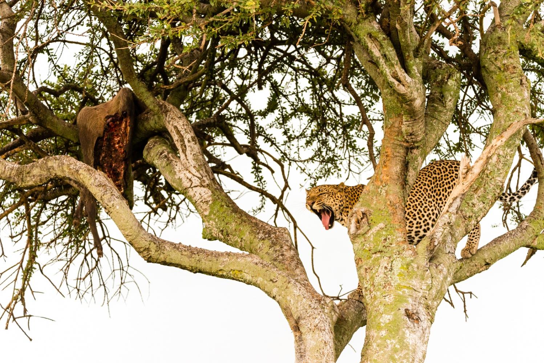 Art and Documentary Photography - Loading Kenya-45.jpg