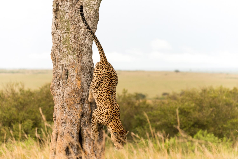 Art and Documentary Photography - Loading Kenya-46.jpg