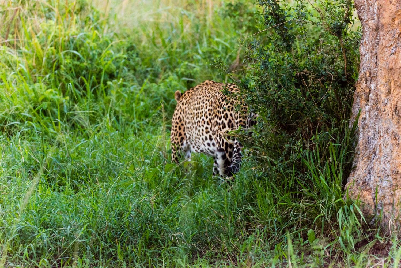 Art and Documentary Photography - Loading Kenya-47.jpg