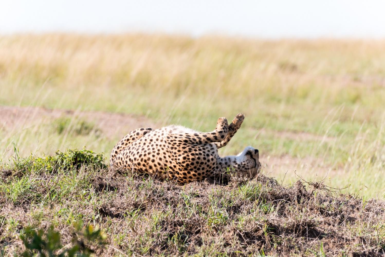 Art and Documentary Photography - Loading Kenya-54.jpg