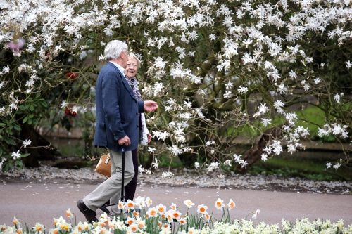 An elderly couple enjoy a afternoon walk at the Keukenhof flower garden in South Holland in the small town of Lisse, south of Haarlem and southwest of Amsterdam.