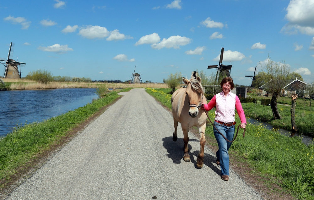 Astrid Poirot exercises her horse Katia in Kinderdijk the most famous group of polder mills and World Heritage listed.