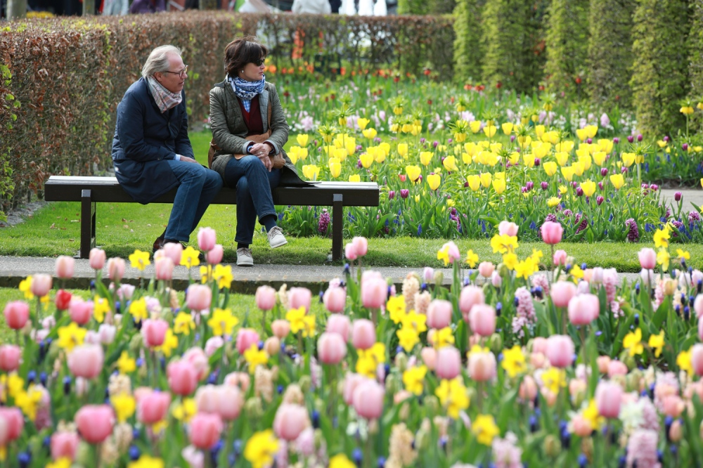 A couple enjoys the Keukenhof in Lisse which is covered by over 7000 bulbs in the spring and is one of the best places to get a good look at many different varieties of tulips.