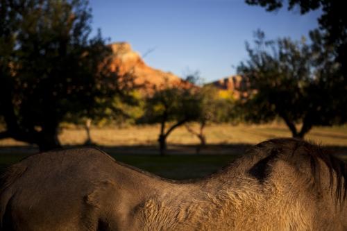 Narrative Landscape - Santa Fe