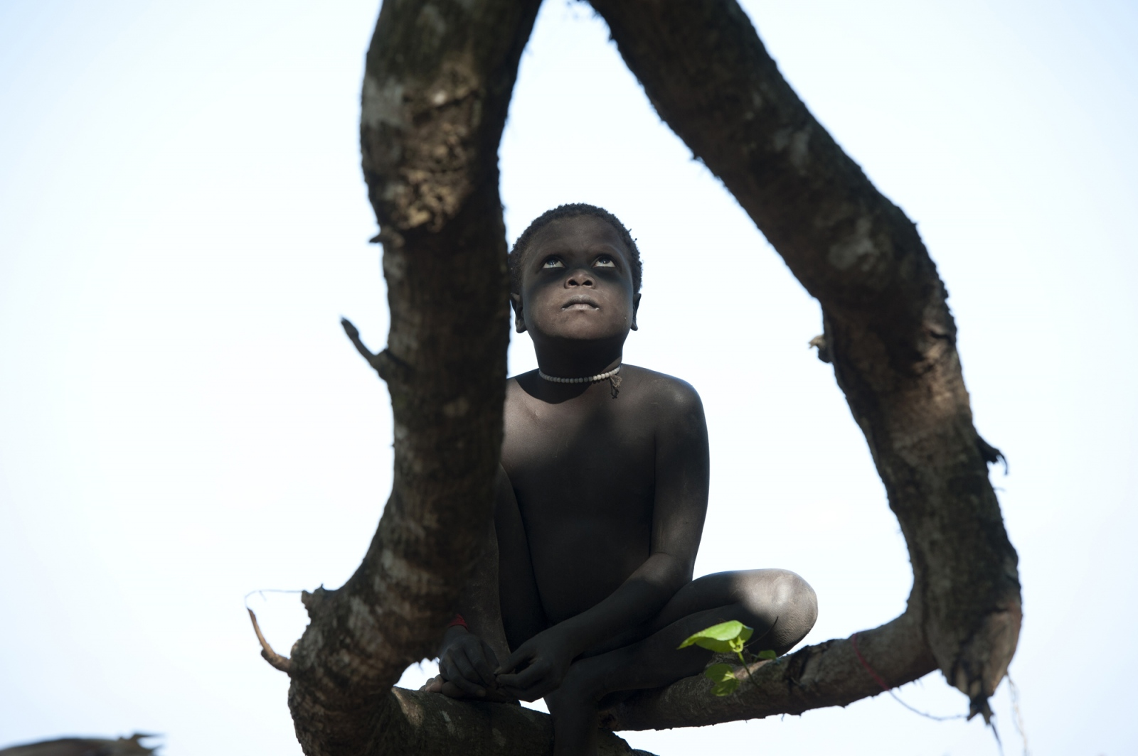 Art and Documentary Photography - Loading jarawa_beilvert_boy_in_a_tree.jpg