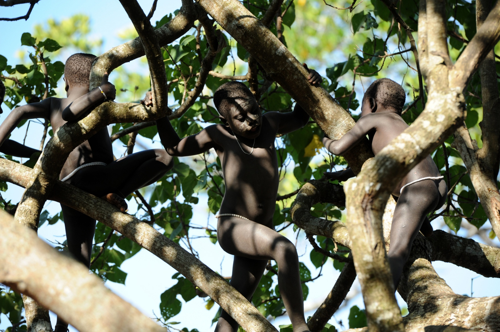 Art and Documentary Photography - Loading jarawa_beilvert_children_playing_in_a_tree.jpg