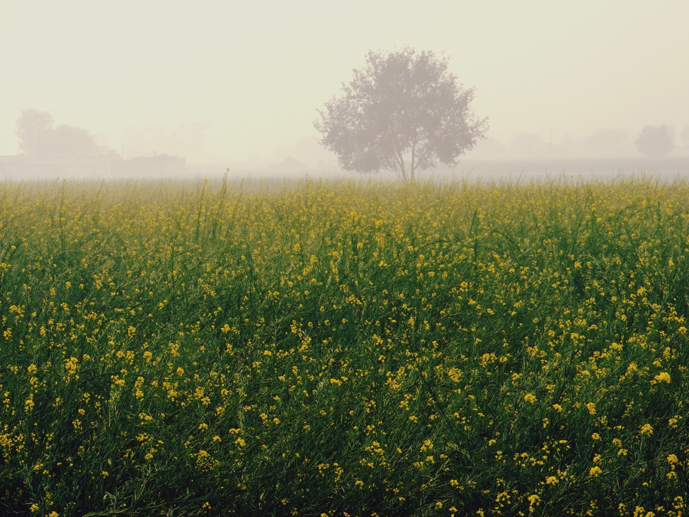 We turned off the highway and onto roads that ran through never ending fields of mustard.