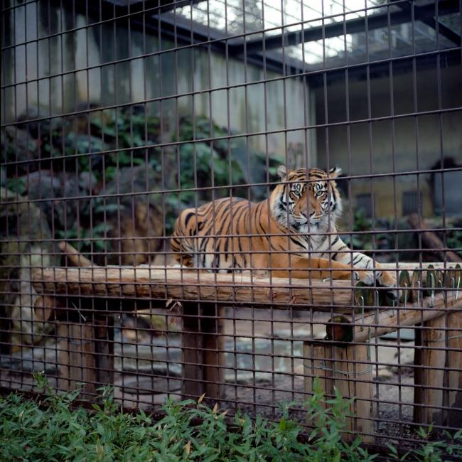 Photography image - Nagoya Zoo