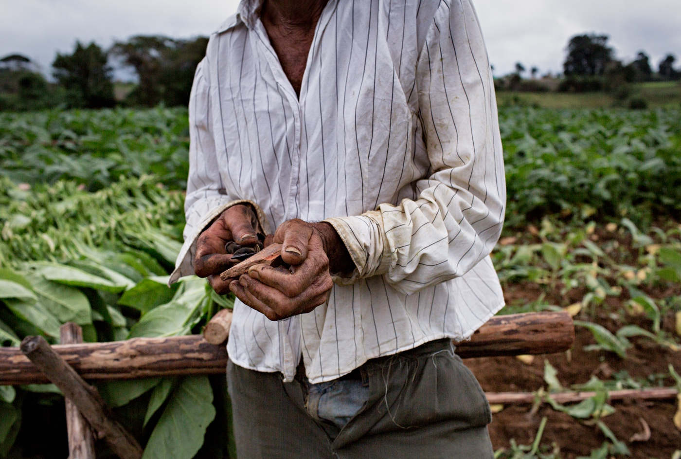 A tobacco farm worker sharpens his knife in a tobacco field during the harvest season in Vinales-a farming village two hours drive from Havana, Cuba
