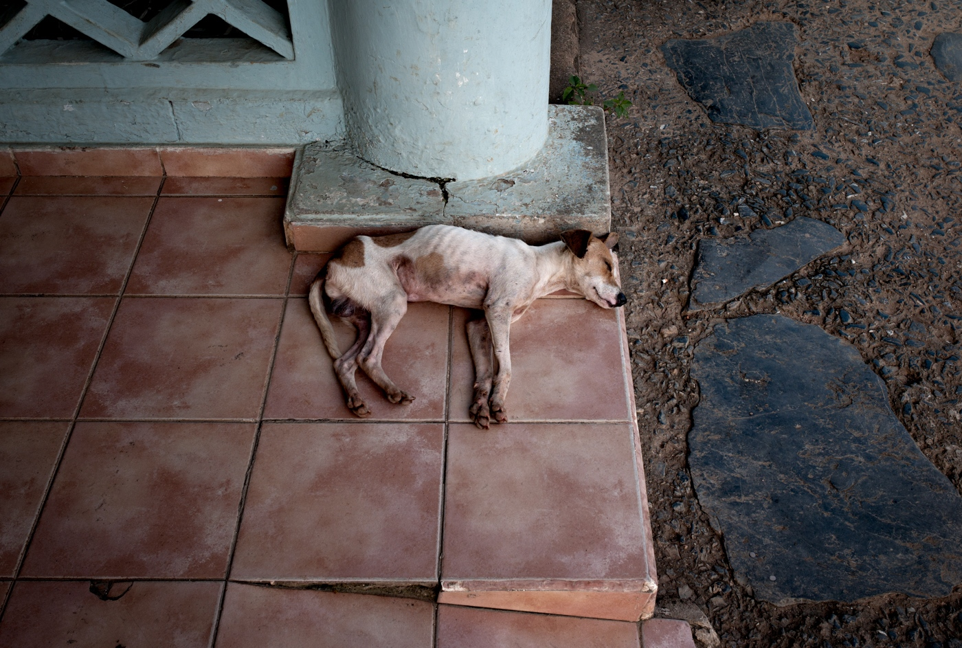 Stray dogs and cats are everywhere in Havana and Vinales (a farming village two hours drive from Havana). They live peacefully among the population and survive on the kindness of strangers.