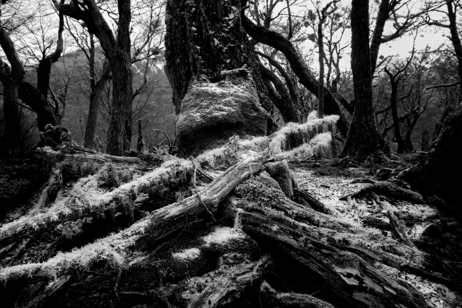 Art and Documentary Photography - Loading fb-3.jpg