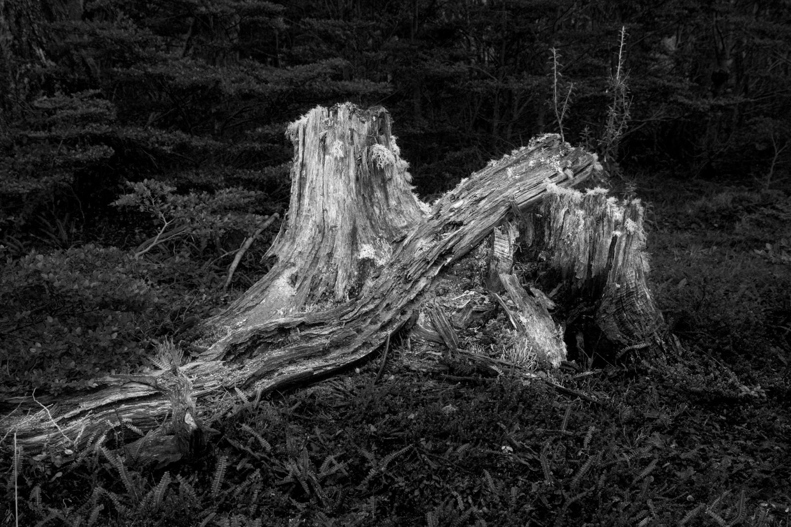 Art and Documentary Photography - Loading fb-4.jpg