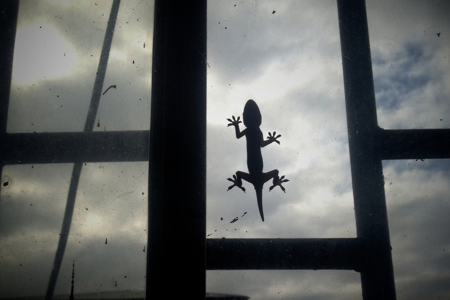 Monrovia, Liberia. July 2013. Gecko on the window. Insect, pests, and small reptiles often infest human dwellings during the rainy season.