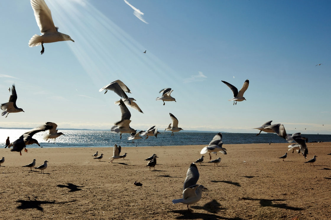 Art and Documentary Photography - Loading 0030_10-New-York-Brighton-beach.jpg