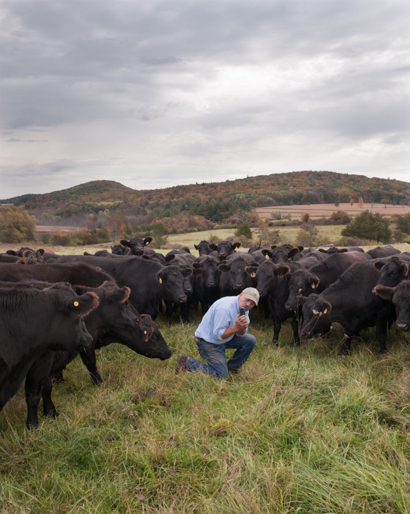 "Farmer Allen updates the status of one of his cows, on his ""Herd Book App."""