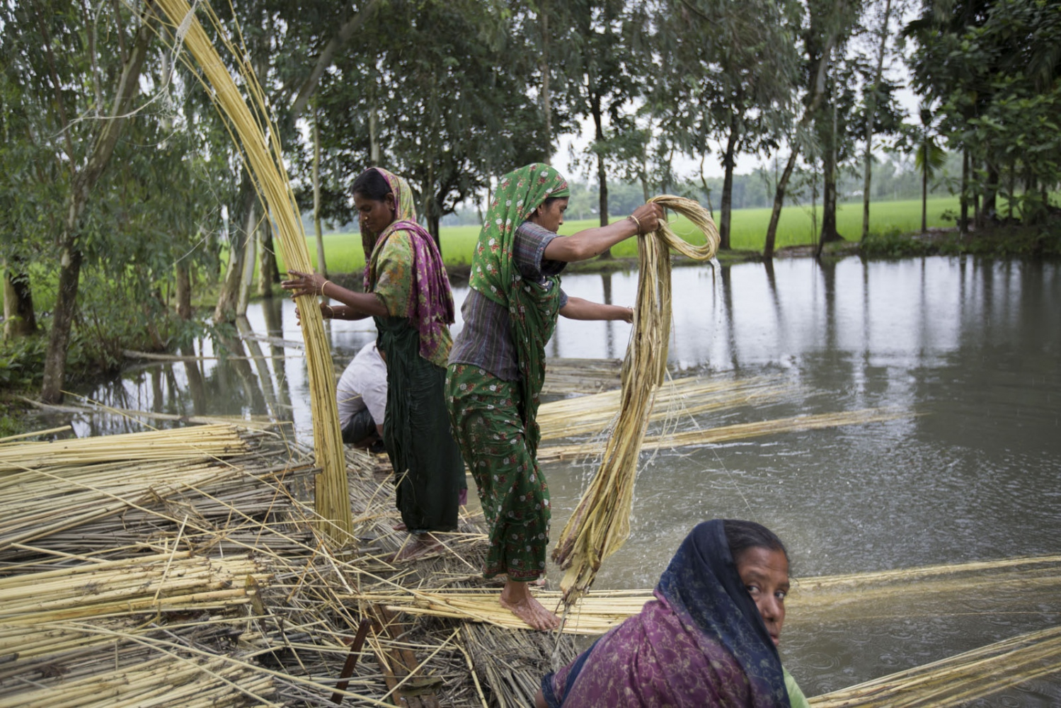 Inside an enclave, or chitmahal, villagers prepare jute that has been submerged in this pond for weeks. For the many inhabitants of the enclaves, jute is where most of their income comes from and also what they use to build their houses. Jute is also known as the Golden Thread of Bangladesh is one of the largest industries in the country.