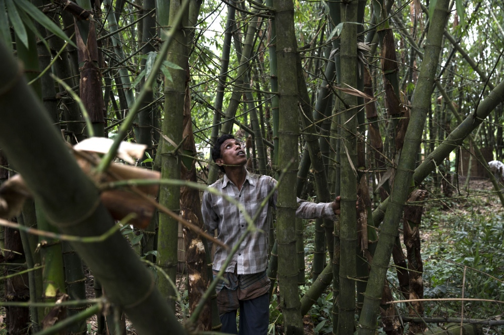 A man living in Ponchoki Bhajini village located inside the enclave of Dhoholakhagrabari inspects bamboo that they will cut down to celebrate a Hindu religious ceremony (durga) next month. All of the inhabitants of this village are Hindu and as a result 20 out of the 22 households will move to India in a few months.