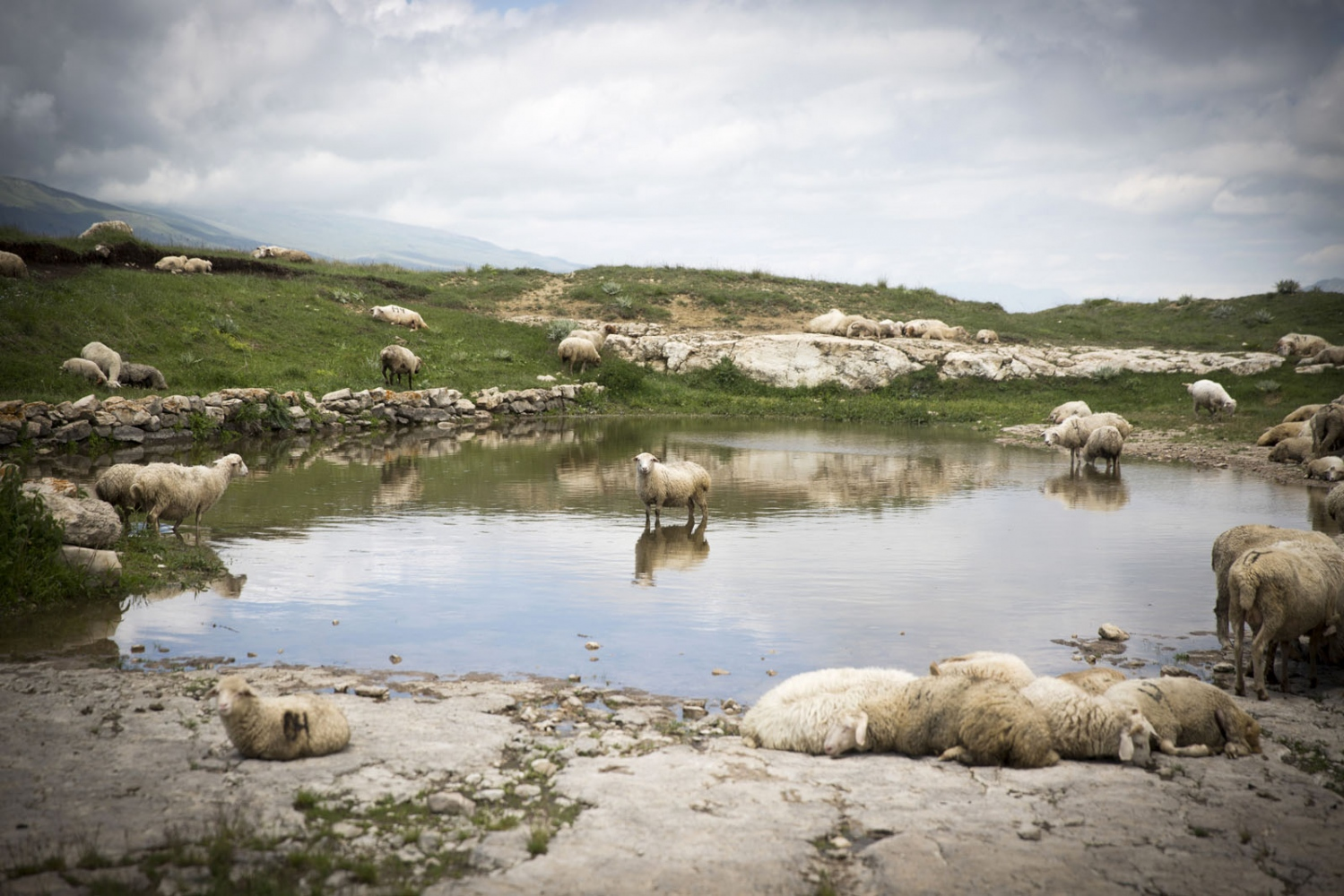 A flock of sheep rest near a natural pond on top of a remote plateau.