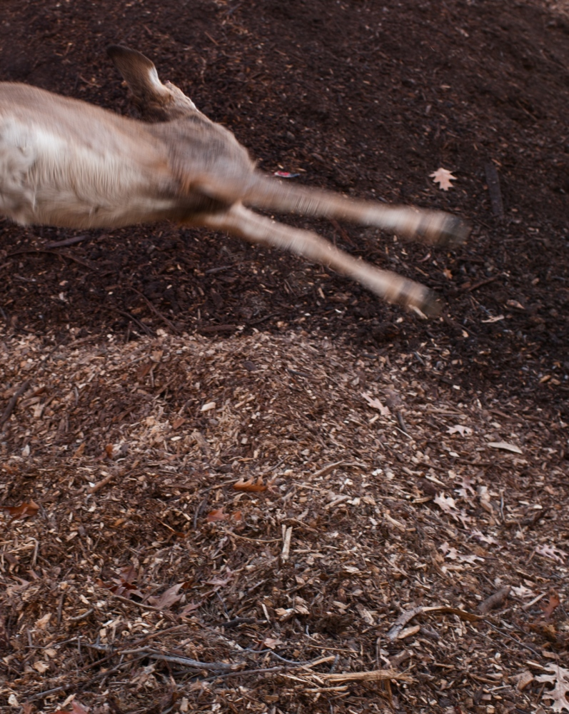 A small deer is tossed onto the pile.