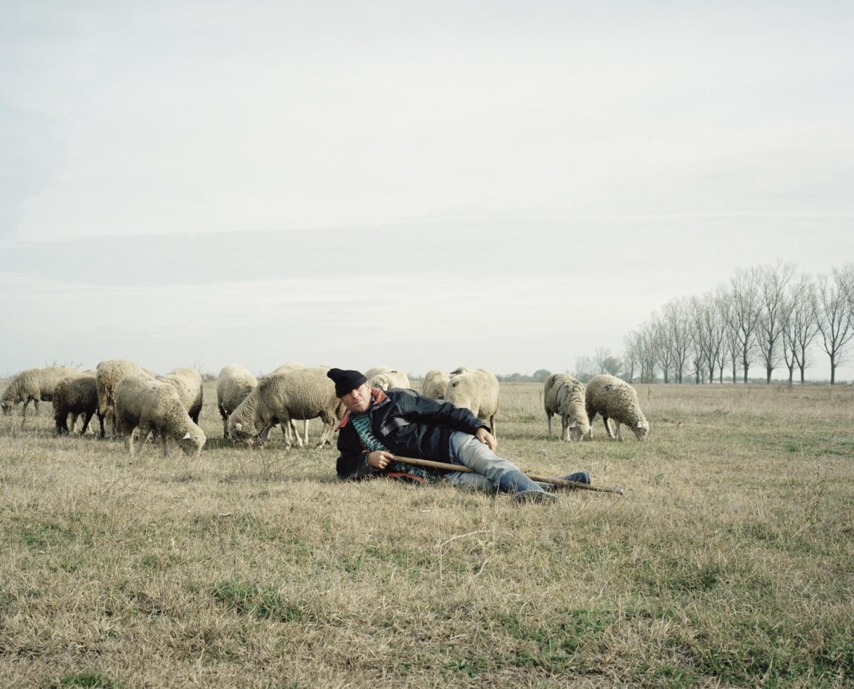 Romania, Calarasi. A farmer with his sheep.