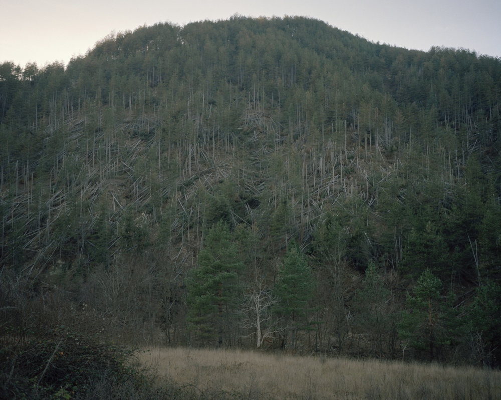 Bulgarian, Smolyan. Deforestation. In the last years Bulgaria approved a law that danger the existence of the country's forests.