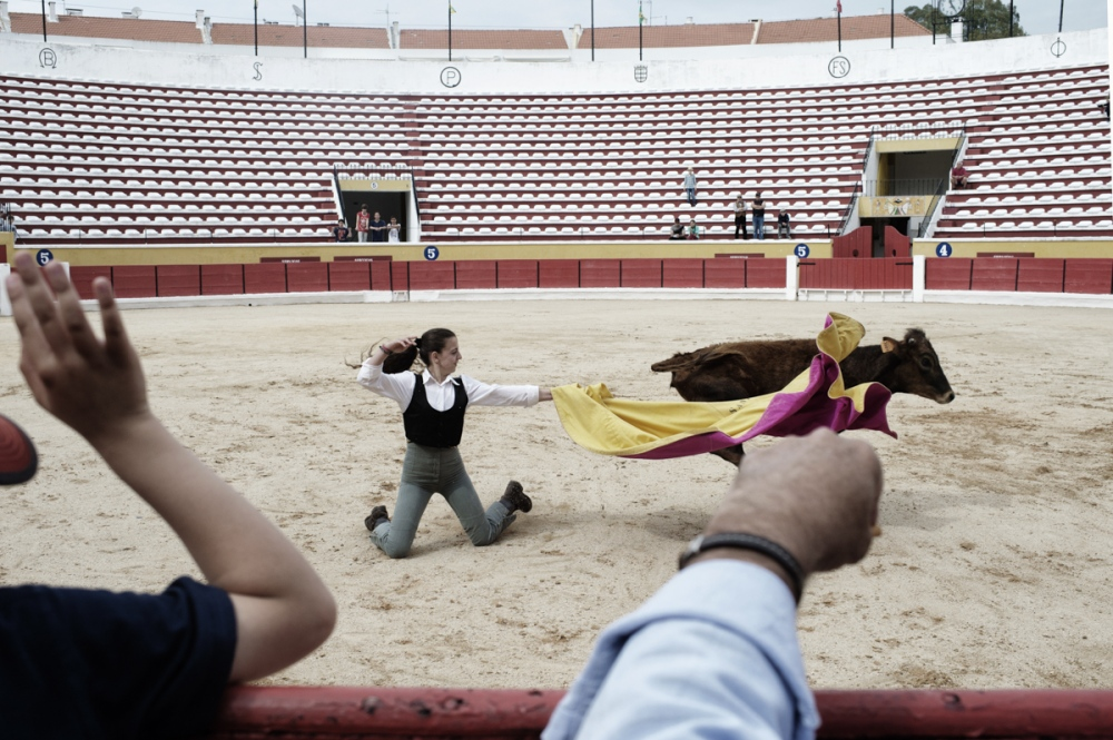 Moita. Paula Santos fighting with a veal during a open class of the bullfight school of Moita. Paula Santos started to bullfight at the ageof 5, now at 16 she is performing in Spain where the bullfighters can kill the bull.