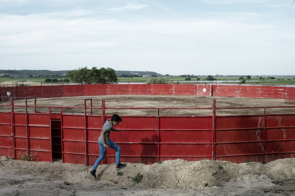 Coruche. The son of a bullfight horse trainer play around the private arena of the horseman João Ribeiro Telles. The horses used in portugal are generally from the Lusitano Race and are trained to the corridas until the age of 7 years.