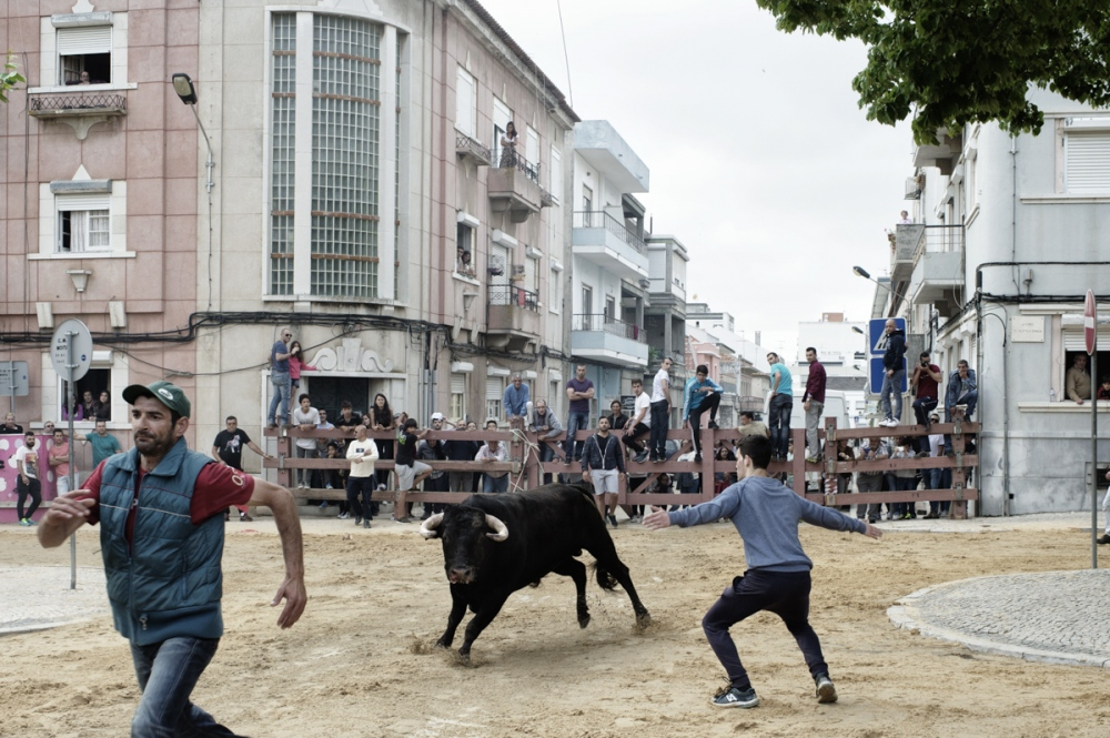 Moita. Running of the bulls. In a running of the bulls several animal are loose in the street and everybody can challenge them.