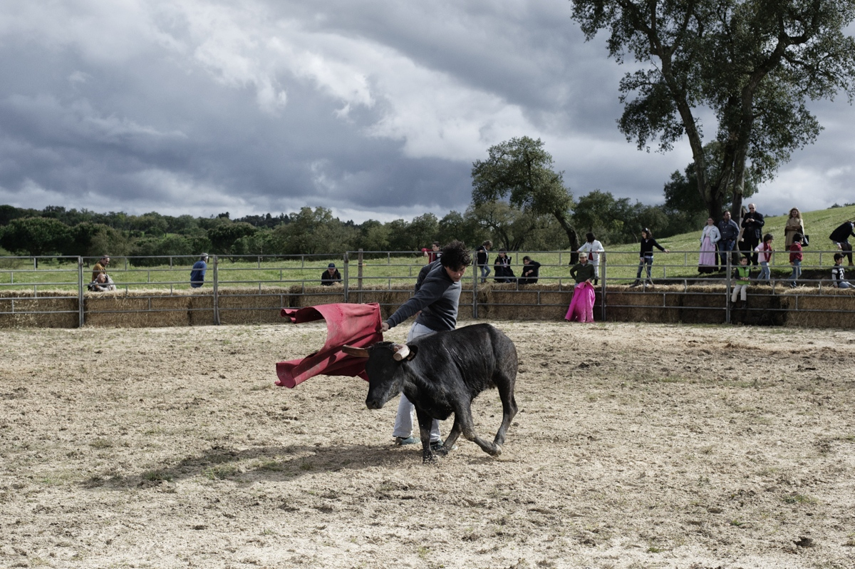 Malhada Alta. An amateur bullfighter challenge a veal in a open field. In the private parties organized by forcados, young boys are introduced to bullfight showing their abilities to professionals.