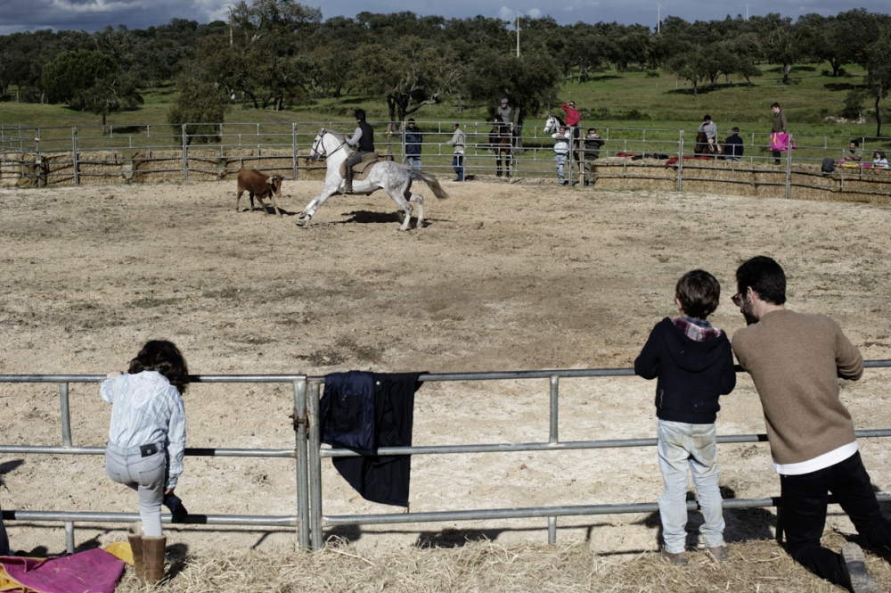 Malhada Alta. During a private party organized by the Forcados of Santarem, two children are introduced to the corrida. Normally the new bullfighters belong to families of bullfighters and the passion for this culture is passed from the elder generation to the younger one. Children are educated to bullfight from a young age, when they are around 5 years old.
