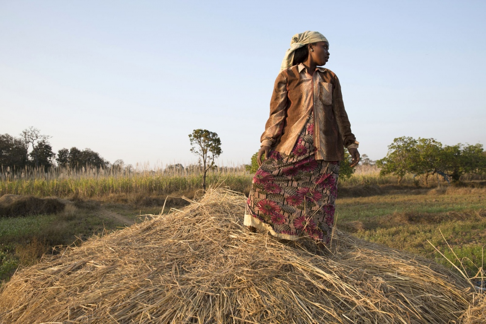 Annie Kambrakar stands on a pile of straw that they have recently harvested on her land outside the village of Gadgera. Uttara Kannada, India