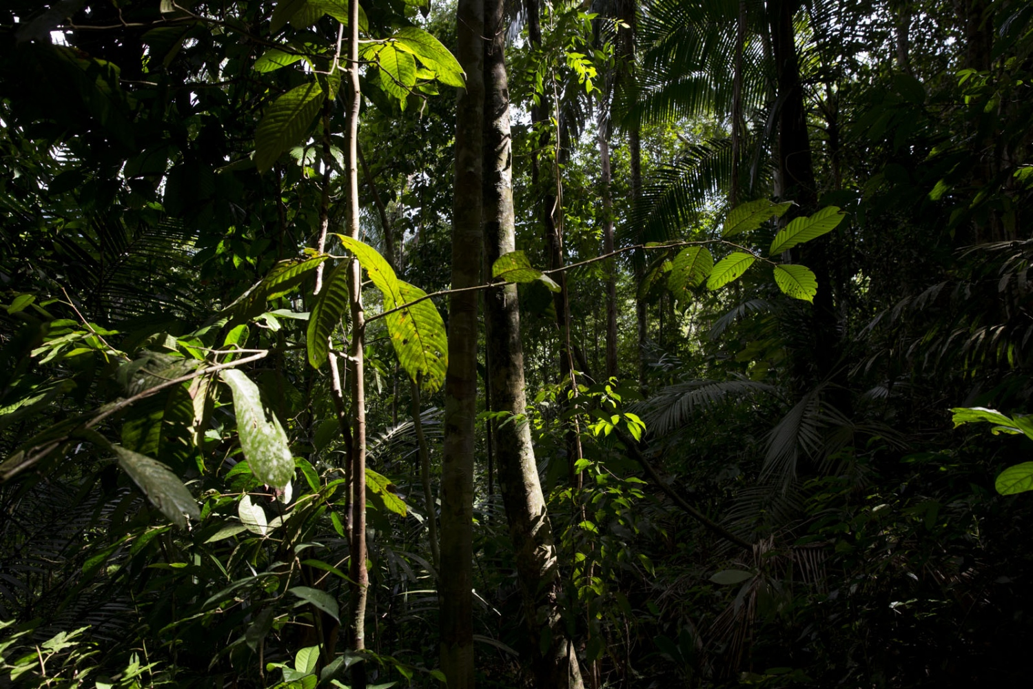 The dense rainforest of the Banthat Mountains. Pattalung - September 2016