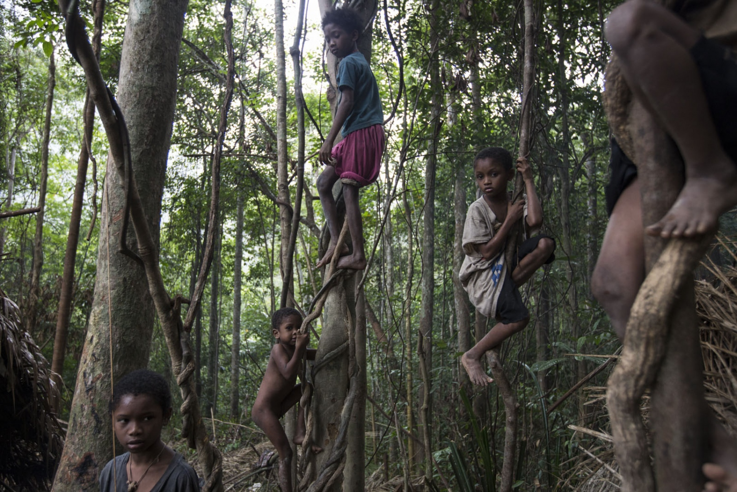 Maniq children play in the trees at one of their temporary settlements. They will stay here for 2-3 months until the food sources in the vicinity are exhausted before moving on. Satun - September 2016