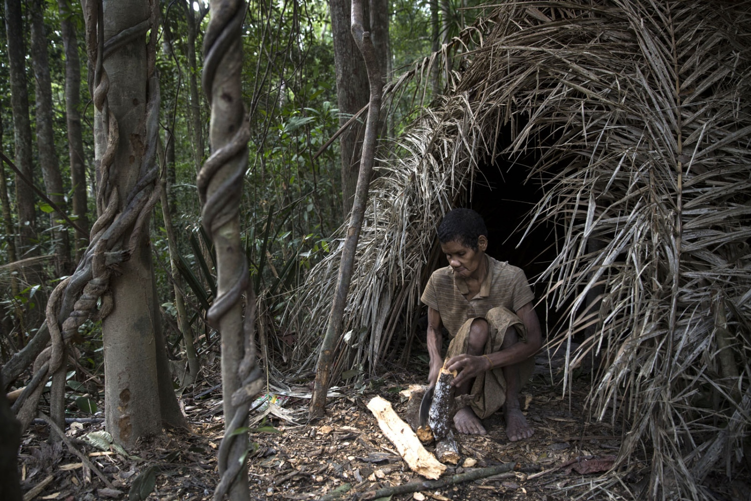 A Maniq elder prepares wood for the fire in the doorway of her shelter. Satun - September 2016