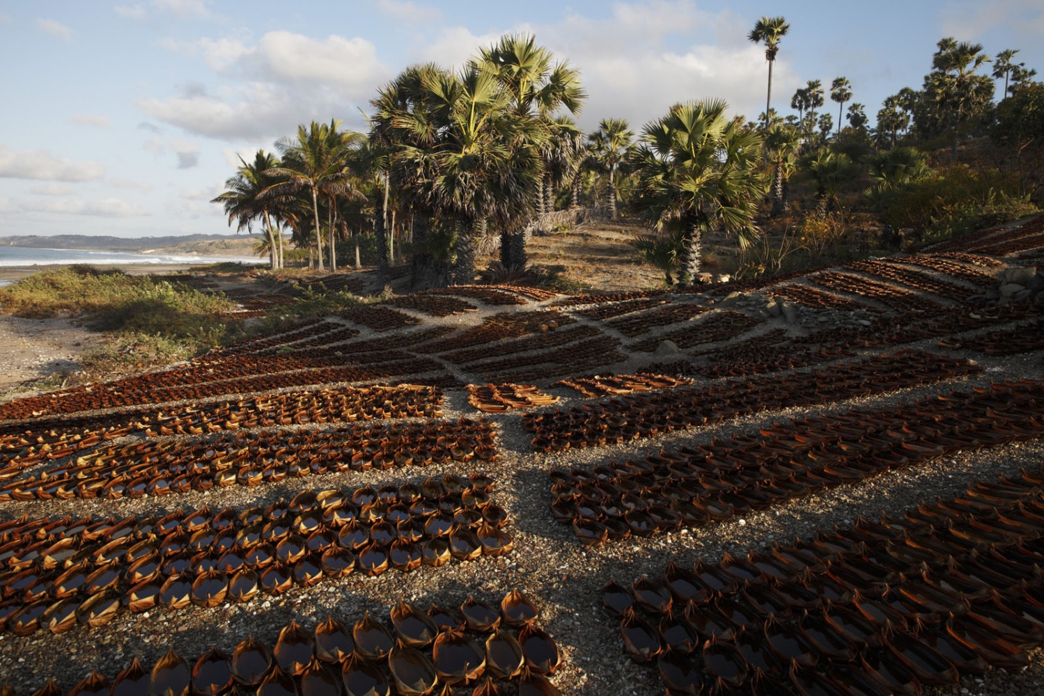 Thousands of tiny salt making 'containers' made of the leaf of the sugar palm tree cover the beach in Eastern Indonesia.