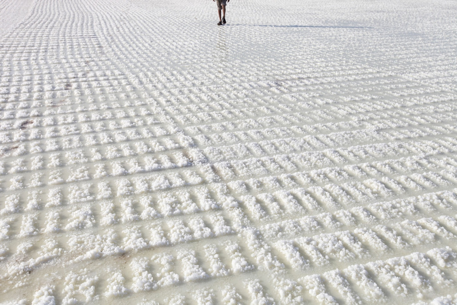 A salt worker walks across salt that is ready to harvest in the Little Rann of Kutch. Gujarat, India.
