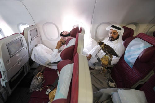Men from Qatar who practise the art of falconry sit with their birds in the economy section of the plane after flying from Azerbaijan to Qatar. Doha, Qatar