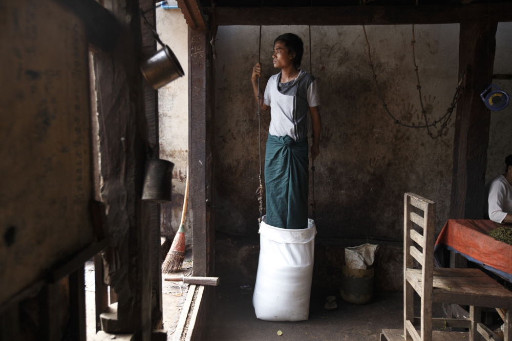 In a small family tea factory a teenage boy stands in a sack of fermented tea compressing it. Namshan, Myanmar