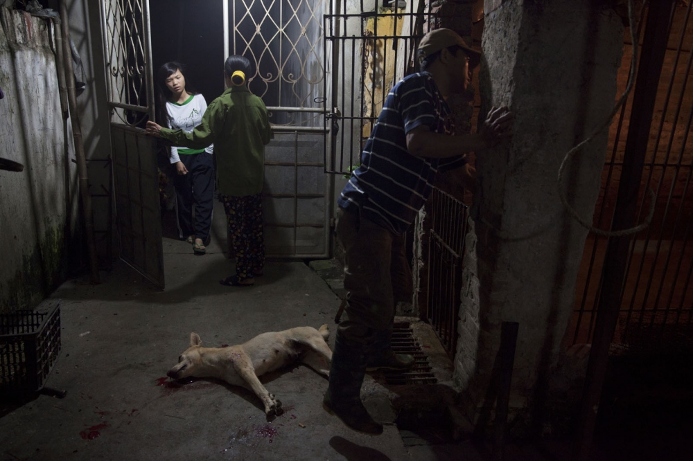 The daughter of a slaughter house owner wakes up early to go to school as the dogs are being killed. Hanoi, Vietnam
