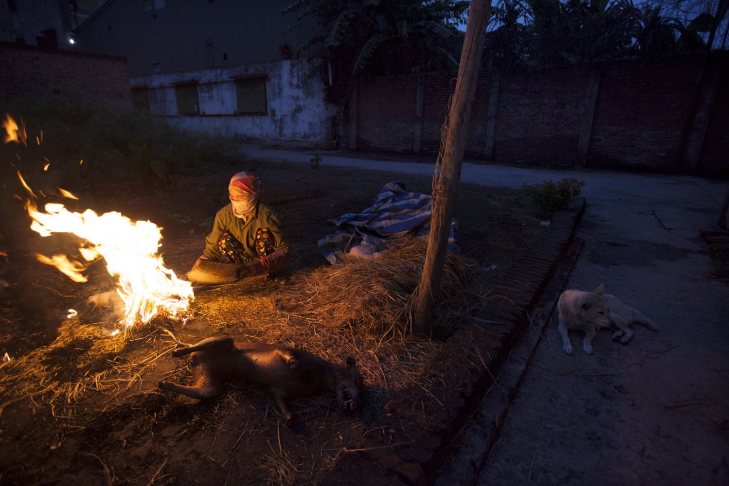 At a slaughter house in the middle of the night, the dogs are killed and prepared for the restaurants as the family's pet dog sits by. Hanoi, Vietnam