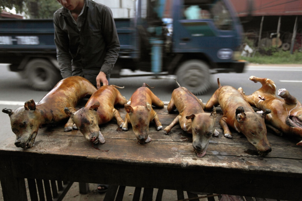 A street stall selling dog meat. Hanoi, Vietnam